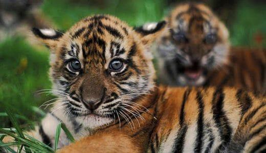 【ジャカルタ&クアラルンプール旅行記】2019GW 改元またぎのアジア周遊 ~SUMATRA TIGER in 1001(スリブサトゥ)~《Epi.8》